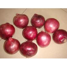 Fresh New Crop Export Boa Qualidade Cebola Vermelha