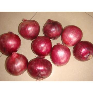 Cebola vermelha fresca da boa qualidade da exportação da colheita