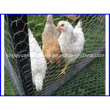 Hot DIP Galvanized /PVC Coated Hexagonal Wire Netting