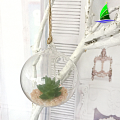 Wholesale Plantas Artificiais Home Decor Glass Terrarium