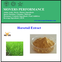 100% Natural Organic Pure Horsetail Extract
