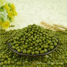 2012 nova colheita verde feijão mungo para brotos com a mais alta qualidade na venda quente