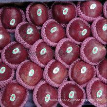 Chinese Dark Red Fresh Apple