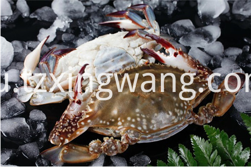 Good Quality Frozen Swimming Crab