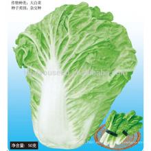 CC05 SD No.5 semillas de repollo chino maduras tempranas, semillas híbridas de repollo chino