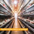 Una jaula de pollo tipo / H tipo en venta en Filipinas