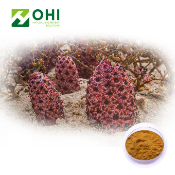 Cistanche Tubulosa chiết xuất bột