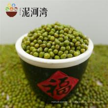 Heißer Verkauf, kleine grüne Mungobohne für das Keimen, neue Ernte 2012
