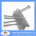 bulk common nail made in china