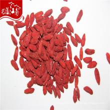 New red wholesale organic qinghai dried qinghai goji berry