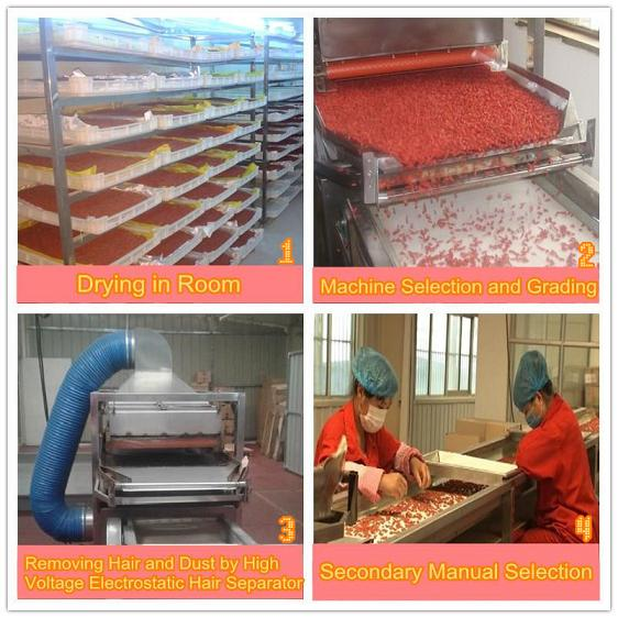 Goji berry drying, processing, selction