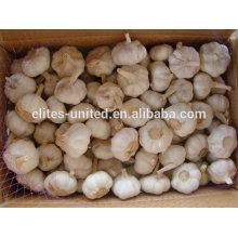 Fresh Garlic manufacturer from China