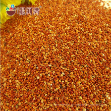 milheto vermelho chineses vassoura vermelha milho milheto