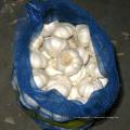 Exportateur De Bonne Qualité Sac chinois frais de maille emballant l'ail blanc pur