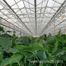 Portable agriculture steel structure greenhouse