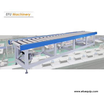 Sistema de transportador de rodillos motorizado