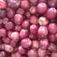 Nouvelle culture chinoise fraîche Huaniu pomme rouge