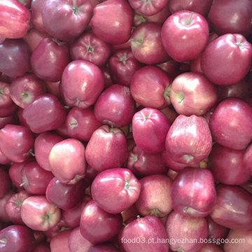 Novo Cultivo Chinês Vermelho Fresco Huaniu Apple