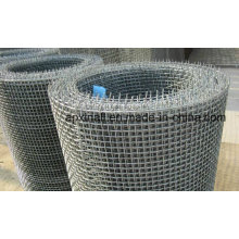 High Quality Hot Dipped or Stainless Steel Crimped Wire Cloth (XA-CWM06)