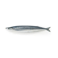 Rond entier Fresh Pacific Saury