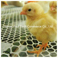 Chicken Farm Use Chick Floor