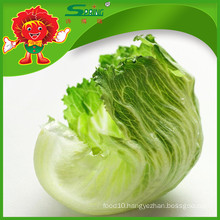Natural Fresh non-pollution Chinese lettuce in wholesale price