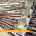 Chicken feeders used in poultry processing equipment