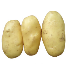 2015 New Crop Fresh Potato (150g and up)