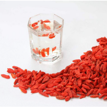 Fruits rouges sains traditionnels de baies de Goji rouges
