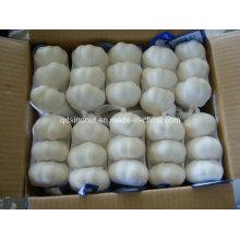 2016 Neue Ernte chinesischen frischen Knoblauch