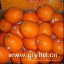Nouvelle culture chinoise Navel frais Orange