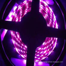 5050 lila geführtes Streifen flexibles wasserdichtes rgb geführtes Streifenlicht
