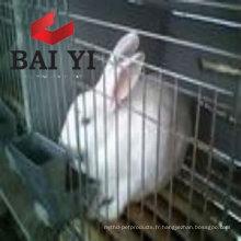 Cages de maille de lapin de conception d'usine pour le Kenya