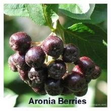 Extracto de Chokeberry natural en polvo CAS: 18466-51-8