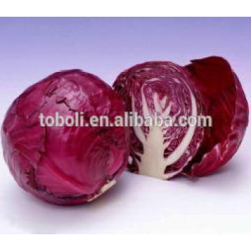 High quality Chinese red cabbage