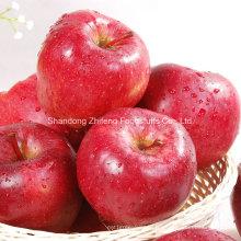 Apple chinois rouge de haute qualité