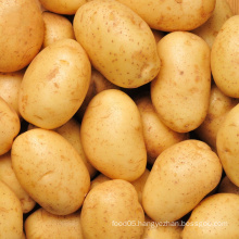 Fresh New Crop Potato From Shandong