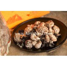 Healthy Vegetable 4-5cm Thin Tea Flower Mushroom