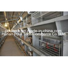 H Typ Schicht Hühnerkäfig Ausrüstung