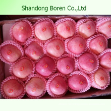 2015 Juicy fresco FUJI Apple de Shandong Boren