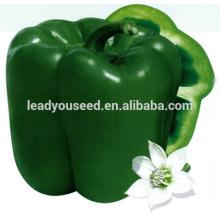 MSP071 Fangzheng venta caliente híbrido semillas de pimiento dulce verde empresa