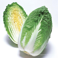 Top quality Great Value Bulk Fresh For Wholesale Natural Chinese Cabbage