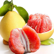 Hot Selling Competitive Price Fruit Honey Red Pomelo