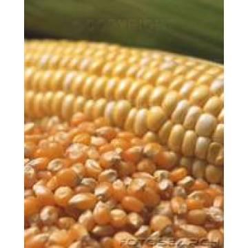 Harina de gluten de maíz 60%