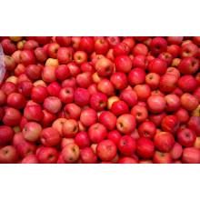 Blush FUJI Apple (70mm)