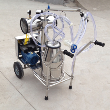 With one bucket milking machine for sheep/goat