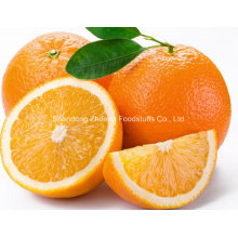 Top Quality Chinese Navel Orange
