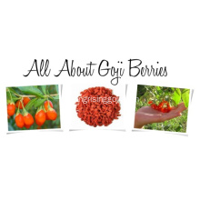 baies de goji conventionnelles 450 wolfberries