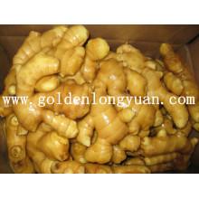 Fresh Ginger High Quality Gap Certificate