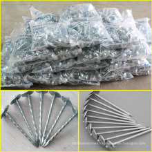 Kenya market competitive price nail and umbrella head roofing nail umbrella head
